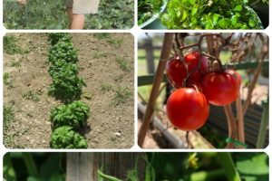 Easy Organic Gardening Tips From The Pros