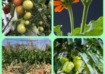 Organic Gardening Advice For A Better Garden