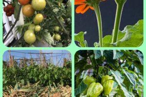 Organic Gardening Advice For A Better Garden