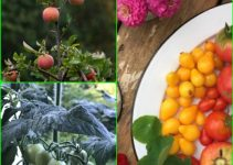 Organic Gardening Tips That Everyone Can Follow
