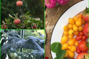 Organic Gardening Tips That Everyone Can Follow