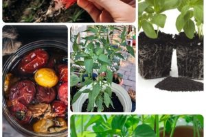 Sowing Seeds: Organic Gardening Advice For Your Garden