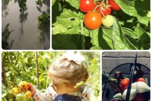 Things You Can Do To Improve Your Organic Gardening