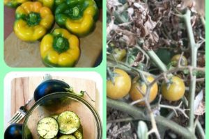 Tips To Help You Succeed With Organic Gardening