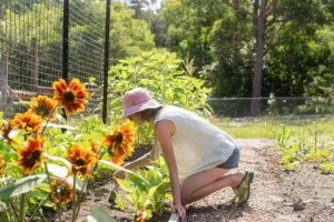 Expert Advice For Easy And Healthy Organic Gardening