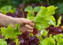 Follow This Advice To Learn More About Organic Gardening