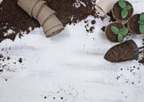 Grow A Healthy Organic Garden With These Tips