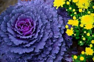 Grow Like A Pro With These Organic Gardening Tips