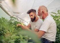 Helpful Organic Gardening Information, Advice, And Tips