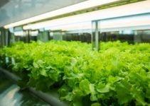 How To Achieve A Beautiful Organic Garden