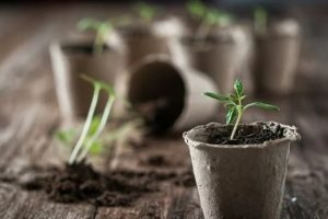 Learn More About Organic Gardening By Taking This Advice