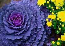 Looking For Organic Gardening Advice? Use These Tips!
