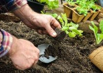 Organic Gardening Ideas To Maximize Your Garden's Potential