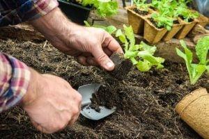 Organic Gardening Ideas To Maximize Your Garden's Potential