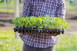 Organic Gardening Tips For Every Season Of The Year