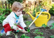 Organic Gardening Tips You Can Try Out Today