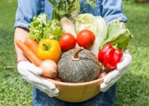 Tips For Harvesting Your Organically Grown Produce