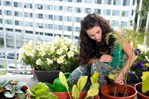 Use These Ideas To Build A Pesticide Free Organic Garden