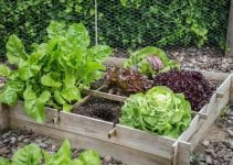 Useful Information For The Novice Organic Gardener