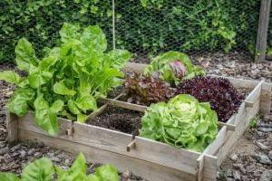 Useful Information For The Novice Organic Gardener