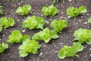 Want To Try Organic Gardening? These Tips Can Help