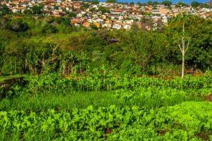Vegetable Gardening: Tips to Ensure Success